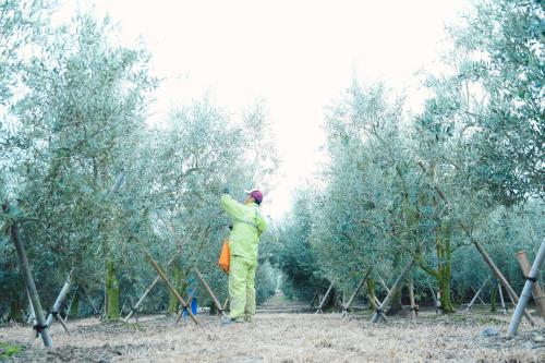 収穫 (2)